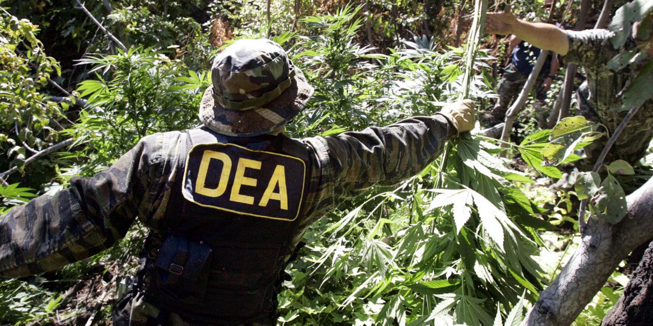 dea-medical-marijuana-1280x640.jpg
