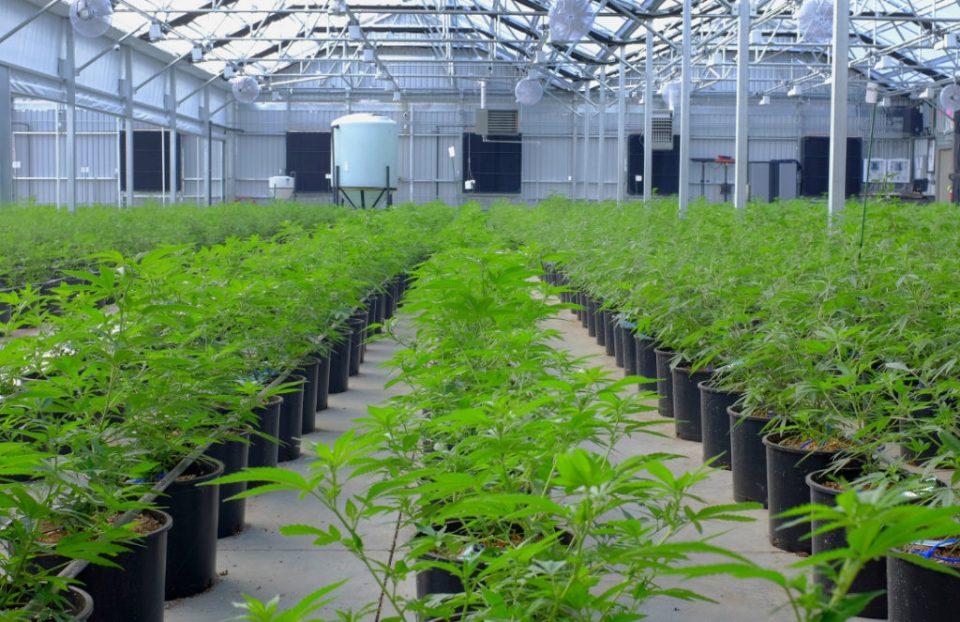 Aurora-Cannabis-Inc-1-1024x663.jpg