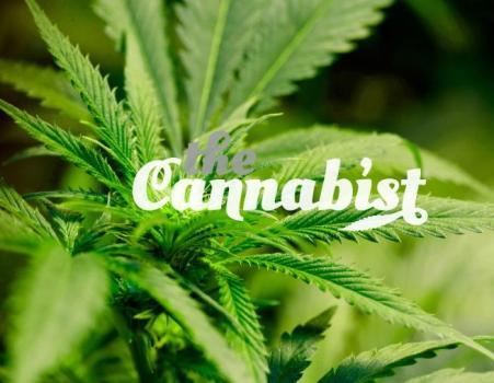 cannabist.jpg