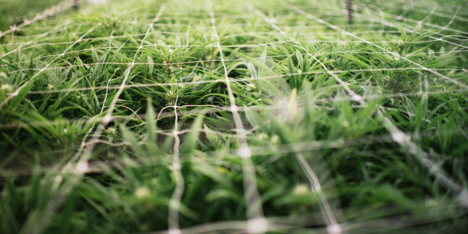 Growforce.jpg