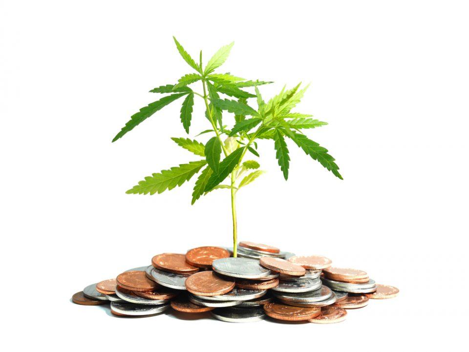 Want Cannabis